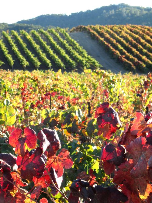 Photo courtesy of one of our favorite wineries, Tablas Creek.
