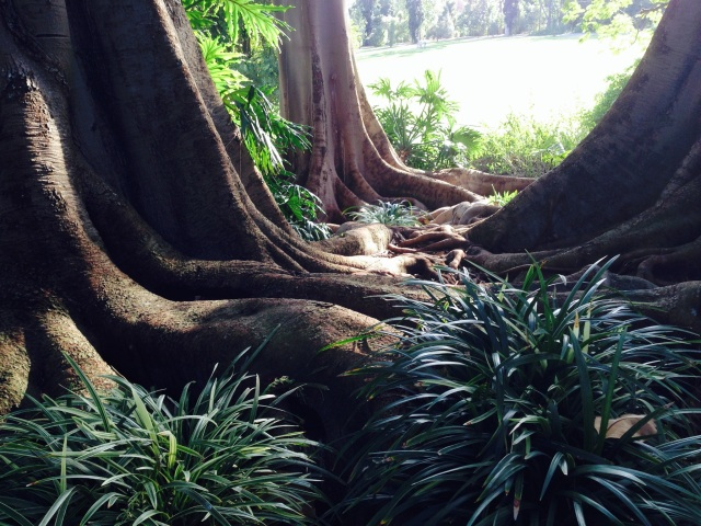 Tree roots at Huntington Library Botanical Gardens from Martin Pierce Hardware