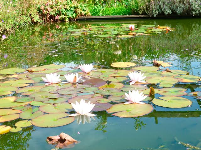 A pond reminiscent of a Money painting. Martin Pierce Hardware